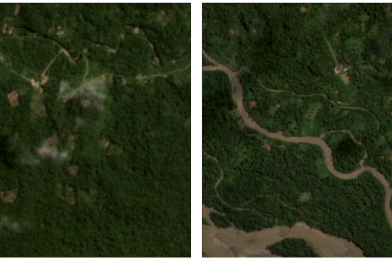 Satellite images from Planet Labs shows recent forest loss in Achuar (left) and Shuar Indigenous Territories.