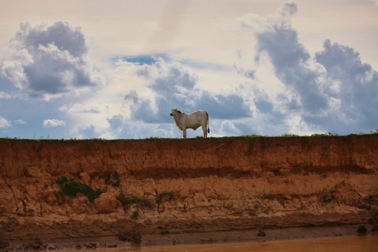 Cow in Colombia. Photo credit: Rhett A. Butler
