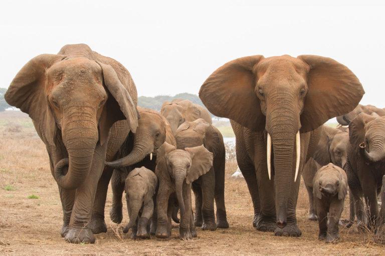 Elephants in Tarangire, Tanzania. Photo credit: Laly Lichtenfeld