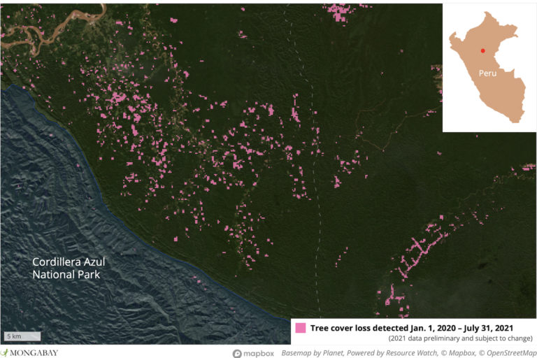 Satellite data from the University of Maryland visualized on Global Forest Watch show deforestation near Satellite data from the University of Maryland visualized on Global Forest Watch show deforestation near Anak Kurutuyaku and Cordillera Azul National Park in 2020 and 2021.