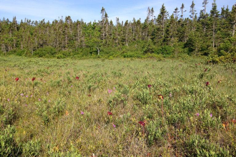 Nova Scotia Forest and Bog. Photo credit: David Jeffrey Ringer