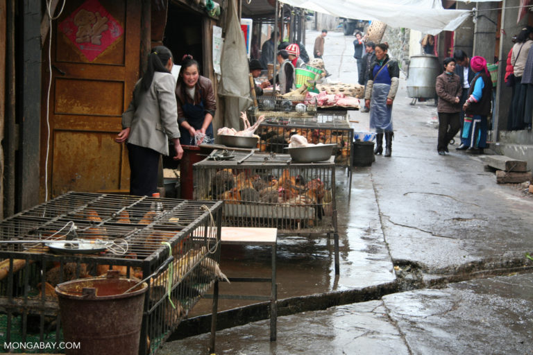 Poultry section of a market in Yunnan province. Photo credit: Rhett A. Butler
