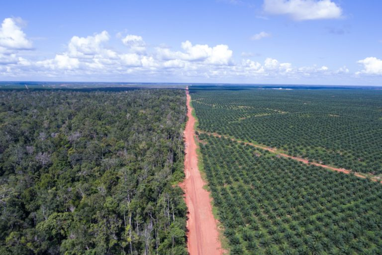 Oil palm plantation. Photo credit: Logging concession in Indonesia. Photo credit: Yudhi Mahendra / Mighty Earth