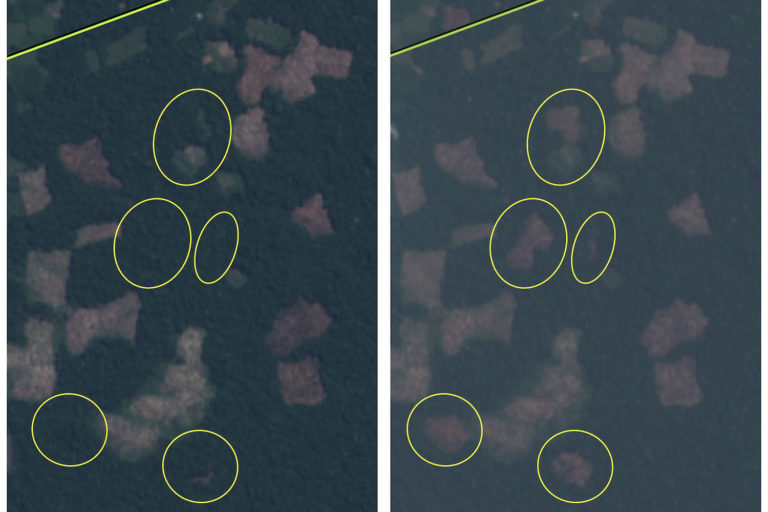 Satellite imagery shows clearings proliferated in July and August.