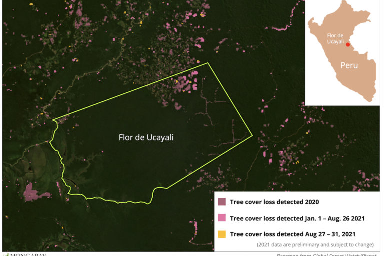 Satellite data from the University of Maryland show forest loss is concentrated in the northeastern part of Flor de Ucayali