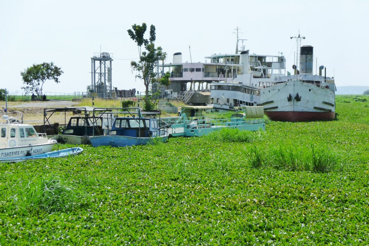 Boats afloat in a lake of hyacinth at Kisumu. Image by Richard Portsmouth via Flickr (CC BY-ND-2.0)