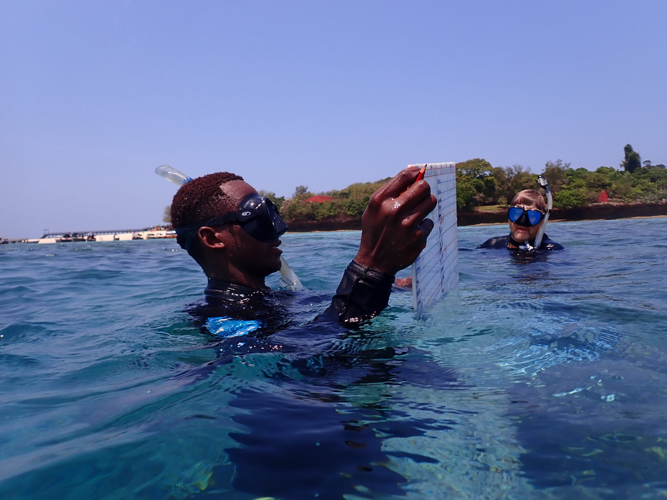 Coral research