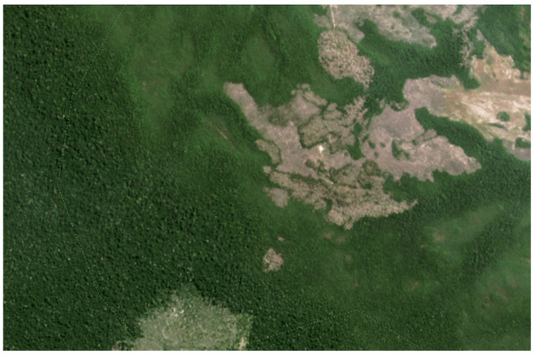 Satellite imagery from Planet Labs captured August 2021 shows large areas of forest loss in the northern portion of Campos Amazonicôs National Park.