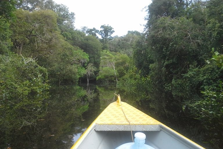 Flooded forest in Campos Amazonicôs National Park. Image by Nat13attack via Wikimedia Commons (CC BY-SA 3.0)