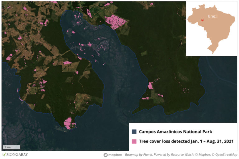 Satellite data show clearing activity encroaching into Campos Amazonicôs National Park.