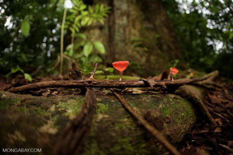 Mycoremediation brings the fungi to waste disposal and ecosystem restoration