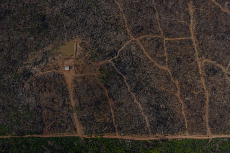 11 Mongabay investigations in two years. Here's what we found