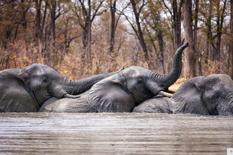 Elephants in Liwonde National Park, Malawi © Frank Weitzer and African Parks