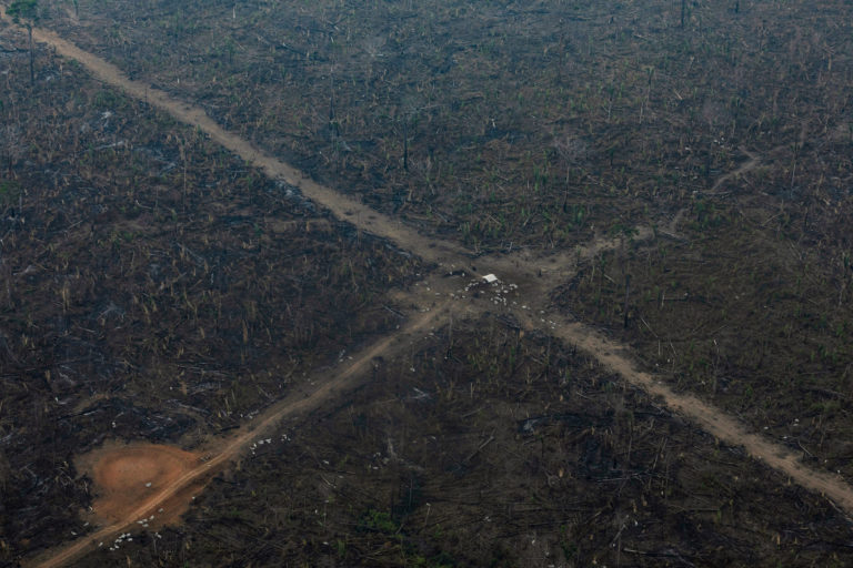 Aerial view of an area in the Amazon deforested for cattle ranching in Lábrea, Amazonas state on Sep 15, 2021. Photo © Victor Moriyama / Amazônia em Chamas (Amazon in Flames Alliance)