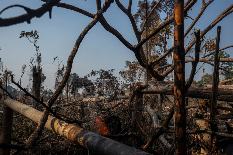 Recently deforested and burnt area in Porto Velho, Rondônia state. Photo © Victor Moriyama / Amazônia em Chamas (Amazon in Flames Alliance)