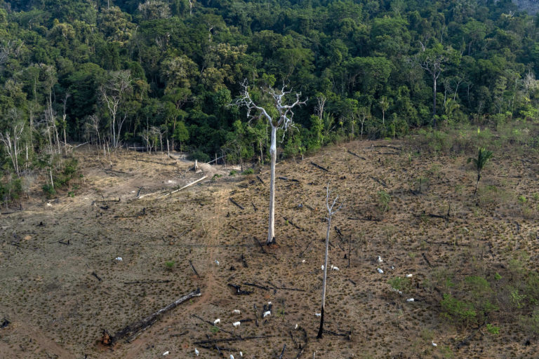 Aerial view of an area in the Amazon deforested for cattle ranching -- the biggest driver of deforestation in the Amazon -- in Lábrea, Amazonas state on Sep 15, 2021. Photo © Victor Moriyama / Amazônia em Chamas (Amazon in Flames Alliance)