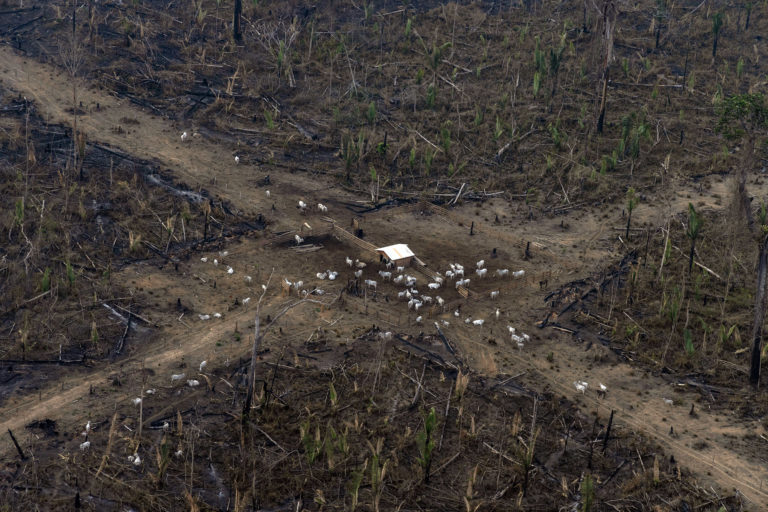 Aerial view of an area in the Amazon deforested for cattle ranching -- the biggest driver of deforestation in the Amazon -- in Lábrea, Amazonas state. Overflights organized by the Amazon in Flames Alliance -- Amazon Watch, Greenpeace Brazil and the Brazilian Climate Observatory -- between September 13th and 17th documented land use change and fire around the cities of Porto Velho, Rondônia, and Lábrea, Amazonas. Photo © Victor Moriyama / Amazônia em Chamas (Amazon in Flames Alliance)