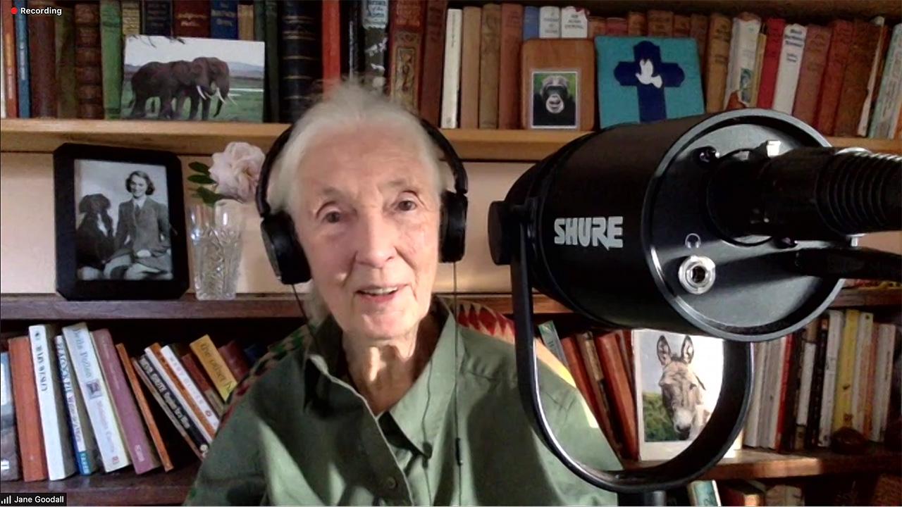 Jane Goodall hosting her Hopecast podcast in September 2021. Photo credit: Mongabay