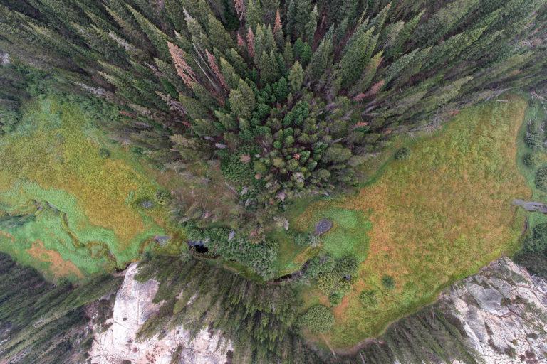 Forest and wetland in California. Photo credit: Rhett A. Butler / mongabay