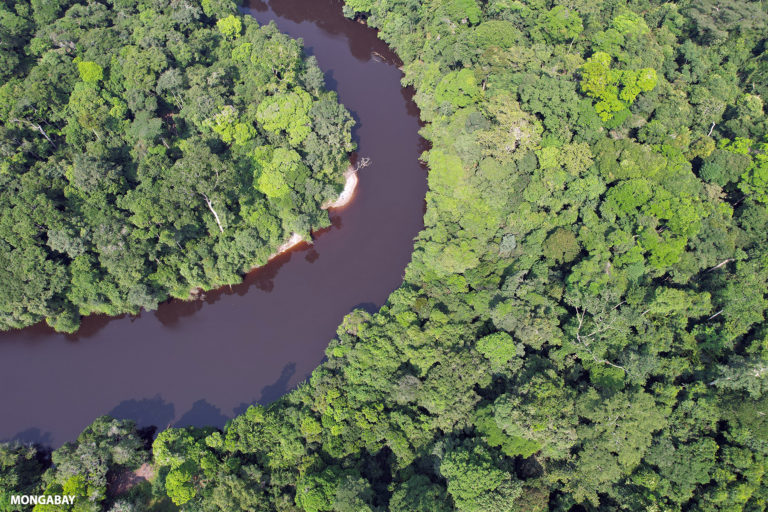 Rainforest in Gabon in the Congo Basin, which is home to chimpanzees. Photo credit: ZB / mongabay