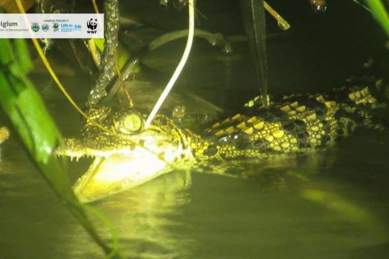 Crocodile-WWF