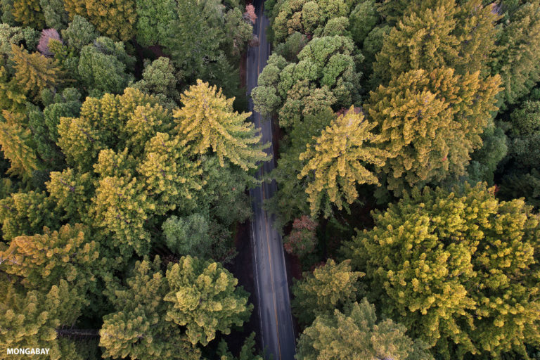 Road through a Redwood forest in Northern California. Photo credit: Rhett A. Butler / Mongabay