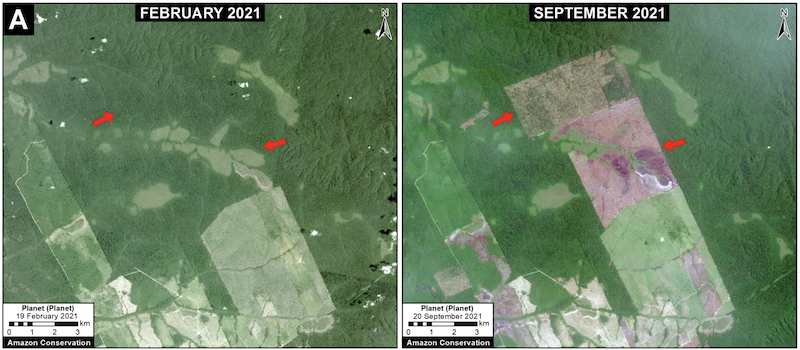 Deforestation in the Brazilian Amazon near road 230 (TransAmazian Highway) between February (left panel) and September (right panel) of 2021. Data: Planet.