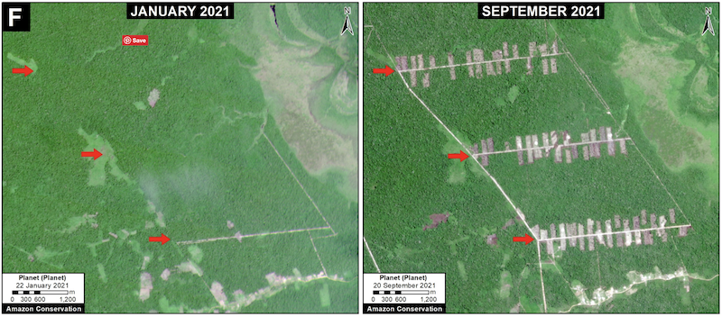 Deforestation (299 hectares) in the Peruvian Amazon for a new Mennonite colony between January (left panel) and September (right panel) of 2021 in southern Loreto region. Data: Planet. Image courtesy of MAAP