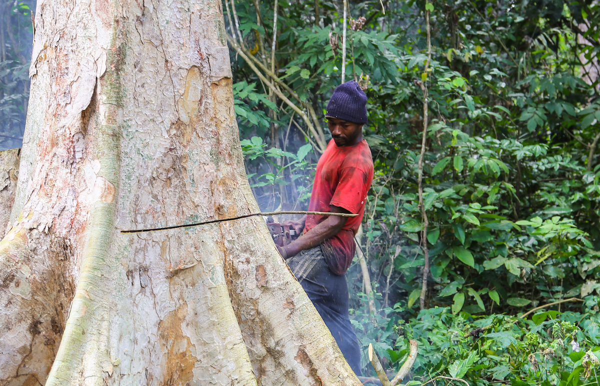 Felling a tree in eastern Cameroon. Image by Mokhamad Edliadi/CIFOR via Flickr (CC BY-NC-ND 2.0)