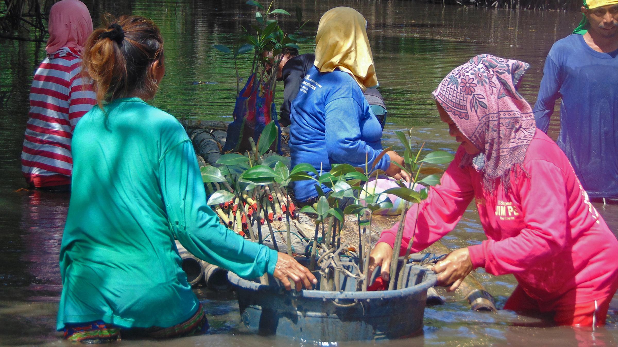 Women on storm-hit Philippine island lead Indigenous effort to restore mangroves