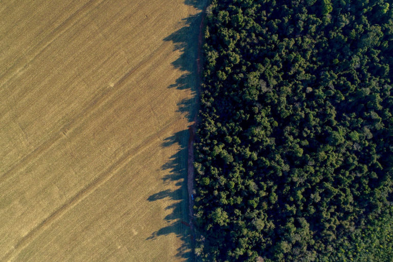 Soy-forest boundary. Photo credit: Mighty Earth