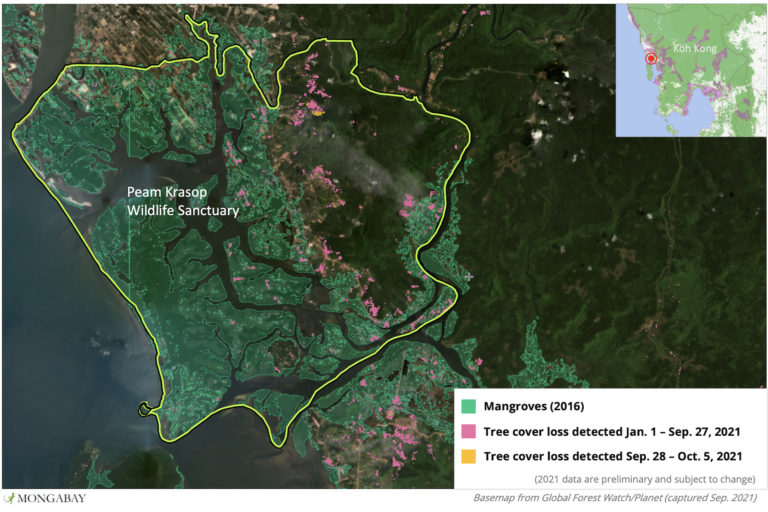 Satellite data from the University of Maryland show tree cover loss has increased in Peam Krasop Wildlife Sanctuary in 2021.