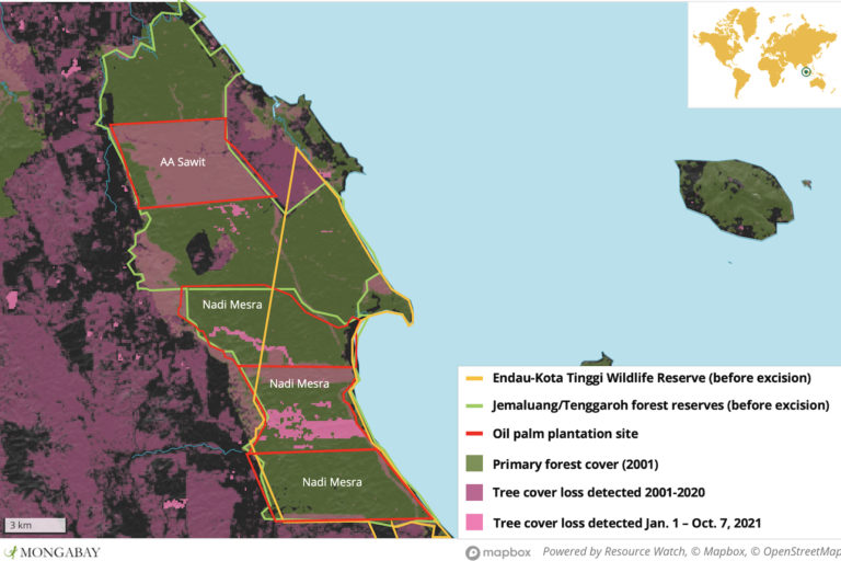 Satellite data show ongoing deforestation in the areas once comprising Jemaluang and Tenggaroh forest reserves. Data sources: University of Maryland, Macaranga, Hutanwatch, EIA reports from AA Sawit and Nadi Mesra.