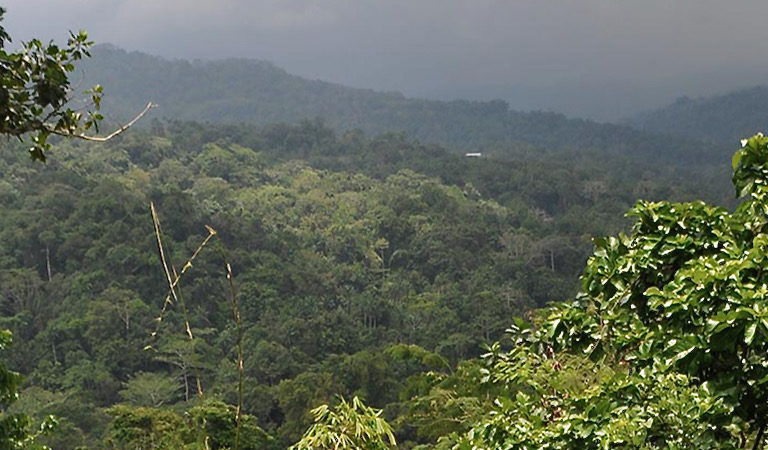 The forests of the Torricelli Mountain Range. Image courtesy of the Tenkile Conservation Alliance.