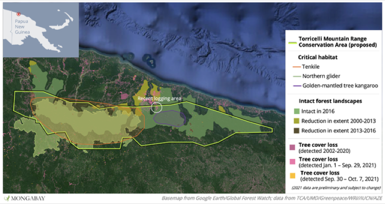 Proposed area of the Torricelli Mountain Range Conservation Area showing the recent losses in intact forest landscapes and tree kangaroo habitat. Image by Morgan Erickson-Davis.