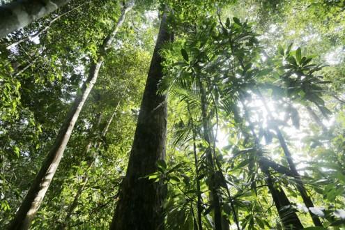Rainforest in Sumatra's Bukit Tigapuluh National Park