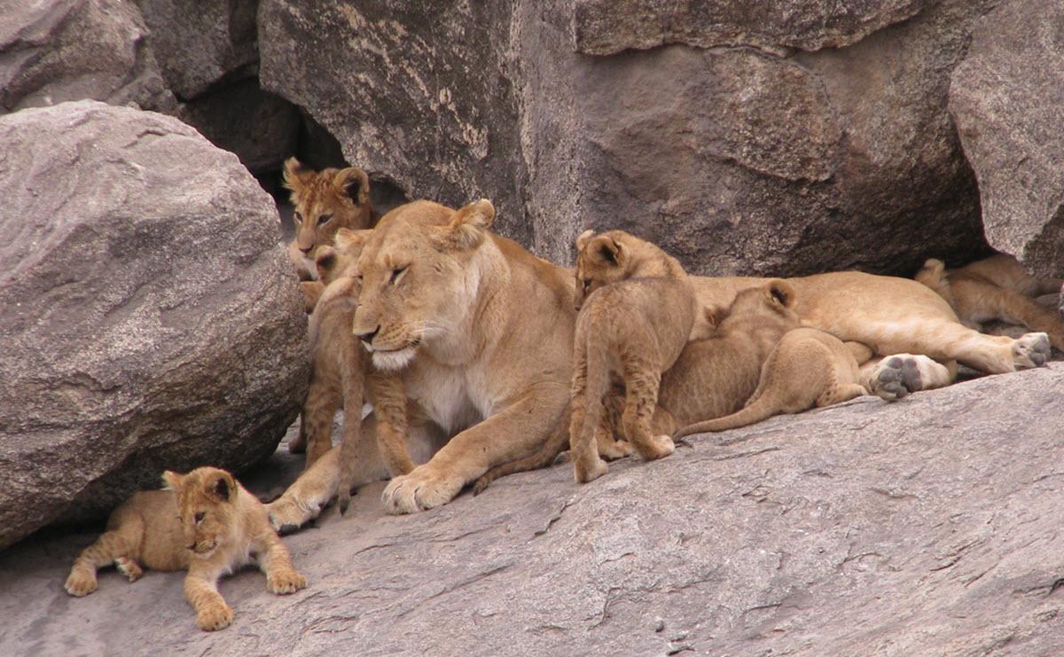 Serengeti NP Day 1 (44)_web