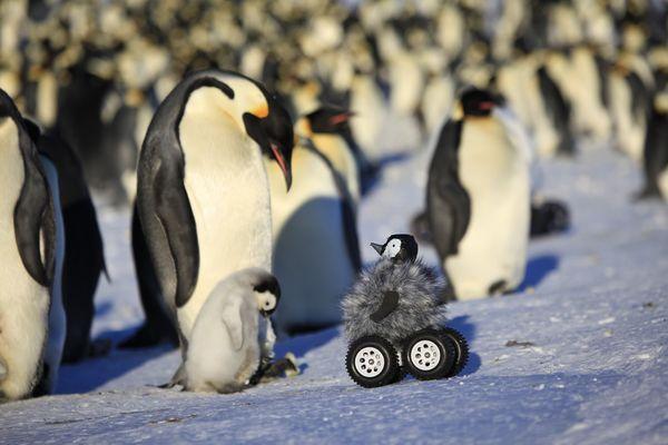LeMahoEtAl penguin-rover_NatureMethods__from dogonews dot com
