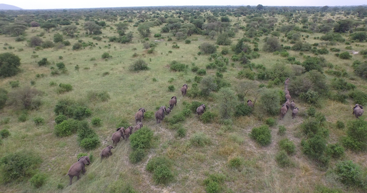 elephants from above