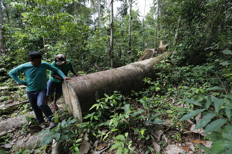 Indigenous group, Greenpeace partner to track illegal ...