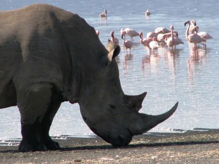 SP_Kenya 5-09 Rhino w-flamingos