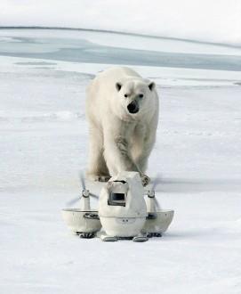 bear & blizzard-cam in DailyMail_JohnDowner