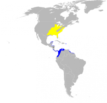 Breeding and wintering ranges of the prothonotary warbler.
