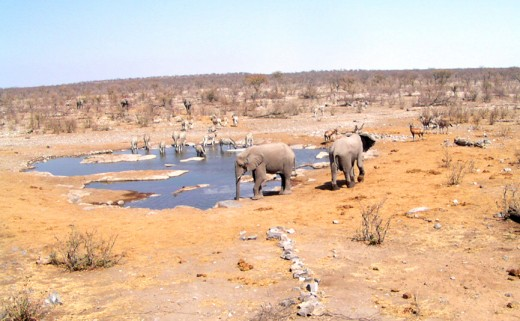 A desert waterhole with wildlife in Namibia