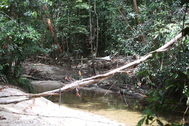 Poachers camp in Kalbar National Park, Borneo. Photo by Rhett Butler