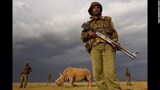 Sudan-white-rhino_CNN