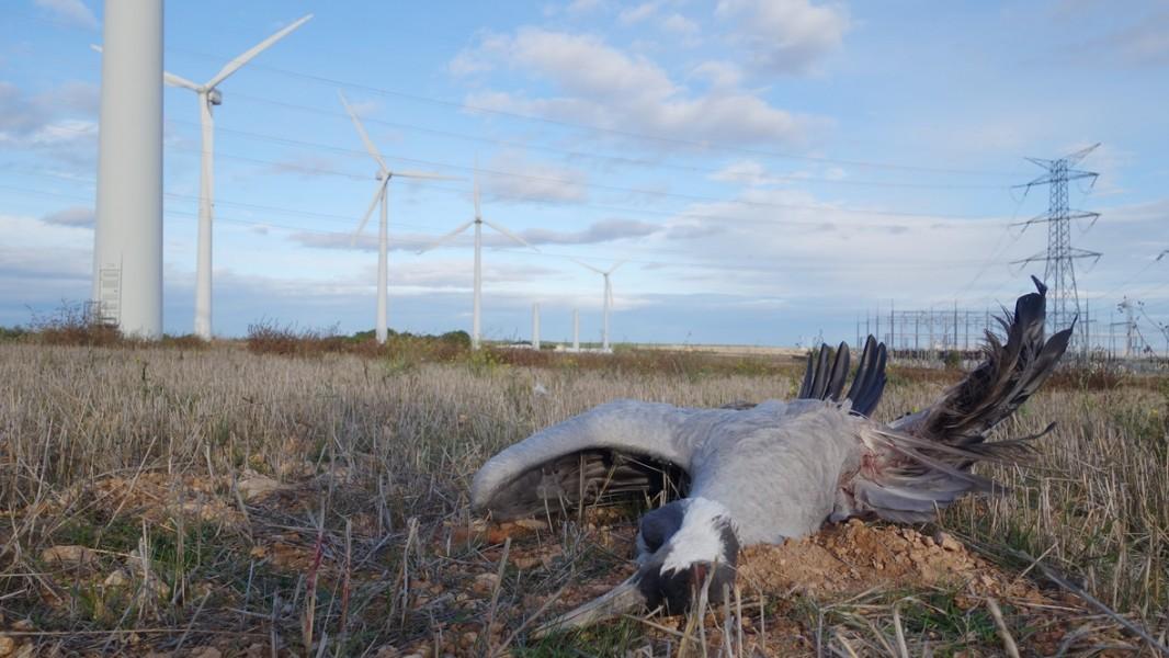 crane killed by turbine