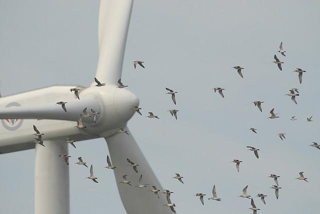 birds flying past turbine