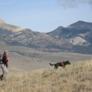 Wicket helps look for carnivores in Colorado