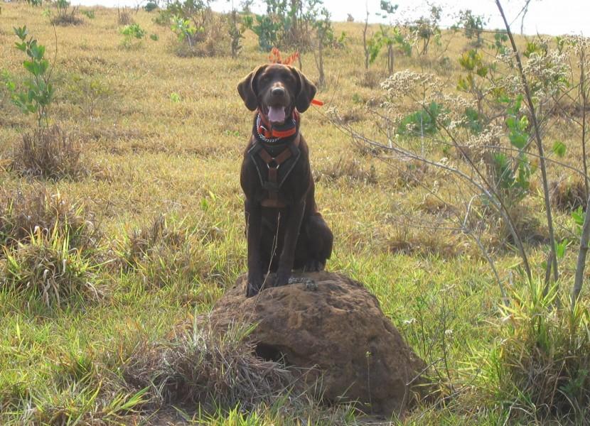 CJ sitting at maned wolf scat on termite mound